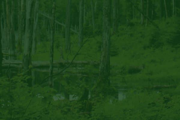 Comment connaître le prix d'un terrain boisé ?